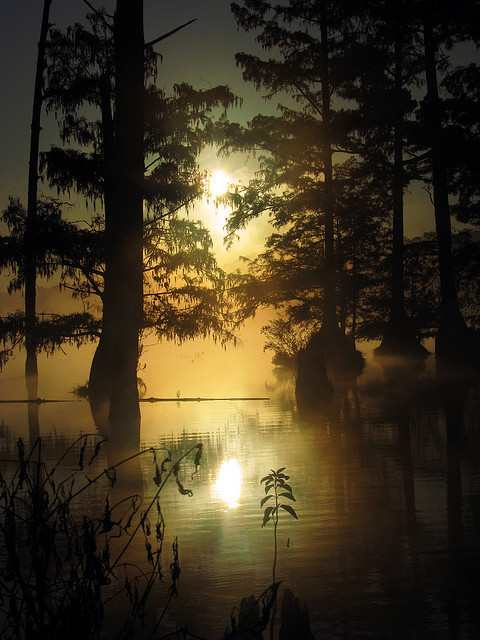 Morning at Bluff Lake, Noxubee National Wildlife Refuge, Mississippi, USA