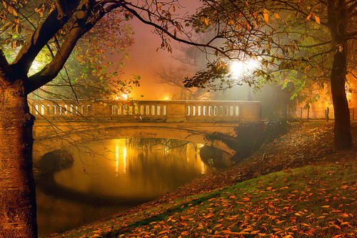 Autumn Fog, West-Vlaanderen, Belgium